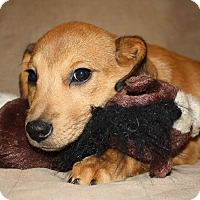 Adopt A Pet :: Olga - Hayes, VA