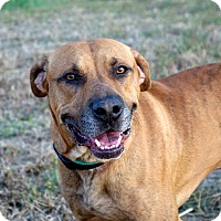 Adopt A Pet :: Rooster Cogburn - Columbia, IL