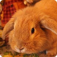Adopt A Pet :: Buddy - Hillside, NJ