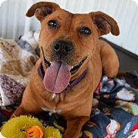 Adopt A Pet :: Star- URGENT!! - Lisbon, OH
