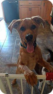 Labrador Retriever Mix Puppy for adoption in WESTMINSTER, Maryland - Chuck
