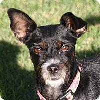Adopt A Pet :: Maggie - Edmonton, AB