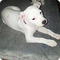 Adopt A Pet :: Everest - Allen, TX