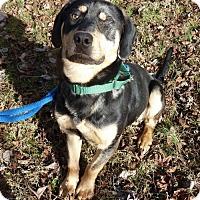 Adopt A Pet :: Brody - Ashland, VA