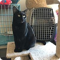 Adopt A Pet :: Jaguar - Surrey, BC
