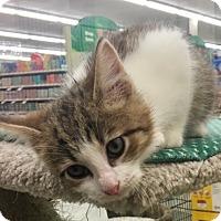 Adopt A Pet :: Big Ben - Warren, OH