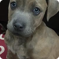 Adopt A Pet :: Sally - Las Vegas, NV