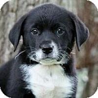 Adopt A Pet :: Happy - Austin, TX