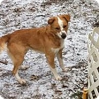 Adopt A Pet :: Rowdy - New Boston, NH