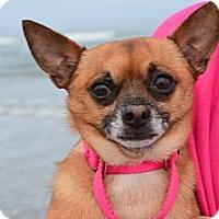 Adopt A Pet :: Taco - Xenia, OH