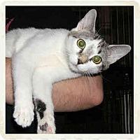 Adopt A Pet :: Bently - Catasauqua, PA