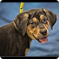 Adopt A Pet :: Aurora - Wickenburg, AZ