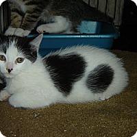 Adopt A Pet :: Rosie - Mundelein, IL