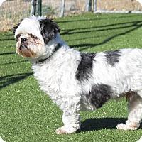 Adopt A Pet :: City - Meridian, ID