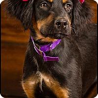 Adopt A Pet :: Cameron - Owensboro, KY