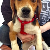 Adopt A Pet :: Willie - Indianapolis, IN