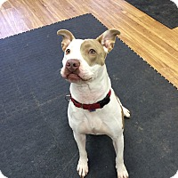 Adopt A Pet :: Nala - Long Beach, NY
