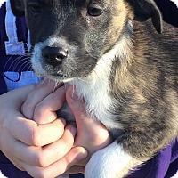 Adopt A Pet :: Patrick#5F - geneva, FL