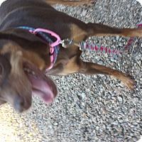 Adopt A Pet :: Liz - Scottsdale, AZ