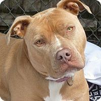 Adopt A Pet :: Chloe - Carmel, NY
