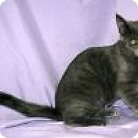 Adopt A Pet :: Skyler - Powell, OH