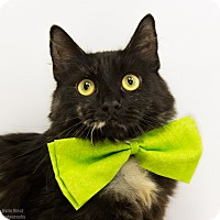 Adopt A Pet :: Salem - Mission Viejo, CA