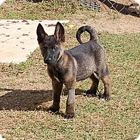 Adopt A Pet :: Diego AD 01-23-16 - Preston, CT