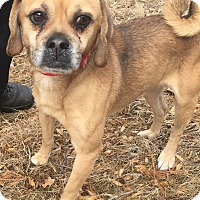 Adopt A Pet :: Pocky - Bloomfield, CT