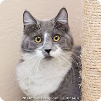 Adopt A Pet :: Kaitlyn - Fountain Hills, AZ