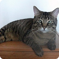 Adopt A Pet :: Coney - Mississauga, Ontario, ON