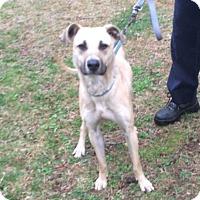 Adopt A Pet :: Skylar - Bloomfield, CT