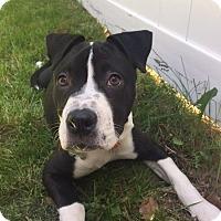 Adopt A Pet :: Remy - Rockaway, NJ