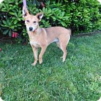 Adopt A Pet :: FOXY - McKinleyville, CA