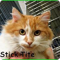 Adopt A Pet :: Stick Tite - Warren, PA