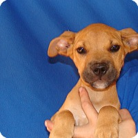Adopt A Pet :: Apollo - Oviedo, FL