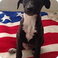 Adopt A Pet :: Jamie - Thousand Oaks, CA