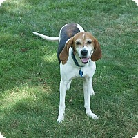 Adopt A Pet :: Amberley Beatty - Urbana, OH