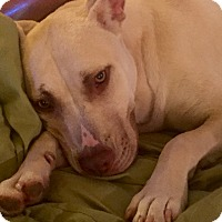 Adopt A Pet :: Renee - CHICAGO, IL