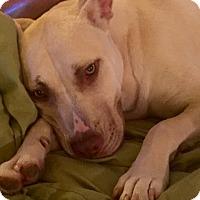 Adopt A Pet :: Diamond - CHICAGO, IL