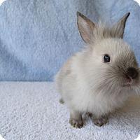 Adopt A Pet :: Bailey - Fountain Valley, CA