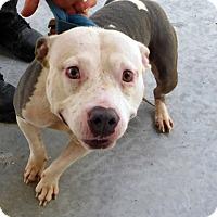 Adopt A Pet :: Twinkle LAST SAFE DAY 9/22/16 - Lake Pansoffkee, FL