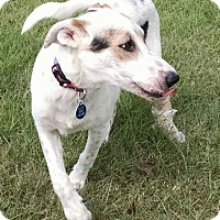 Border Collie Mix Dog for adoption in Cat Spring, Texas - Summer