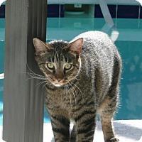 Adopt A Pet :: Acha - Oviedo, FL