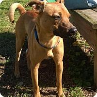 Adopt A Pet :: KNOX - Terre Haute, IN