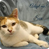Adopt A Pet :: Sari - West Des Moines, IA