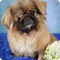 Adopt A Pet :: Delia - Inver Grove, MN