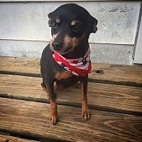 Adopt A Pet :: Lennox - Russellville, KY