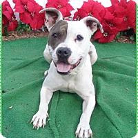 Adopt A Pet :: DIDI - Marietta, GA
