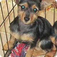 Adopt A Pet :: Gemma - Camden, SC
