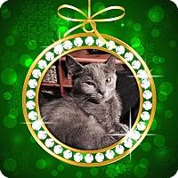 Adopt A Pet :: Steven - Richmond, VA